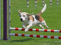 Intro to Agility Ability (Level I)